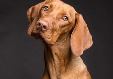 Ti piacciono gli animali? Conosci tutte le razze di cani? Mettiti alla prova con questo quiz?