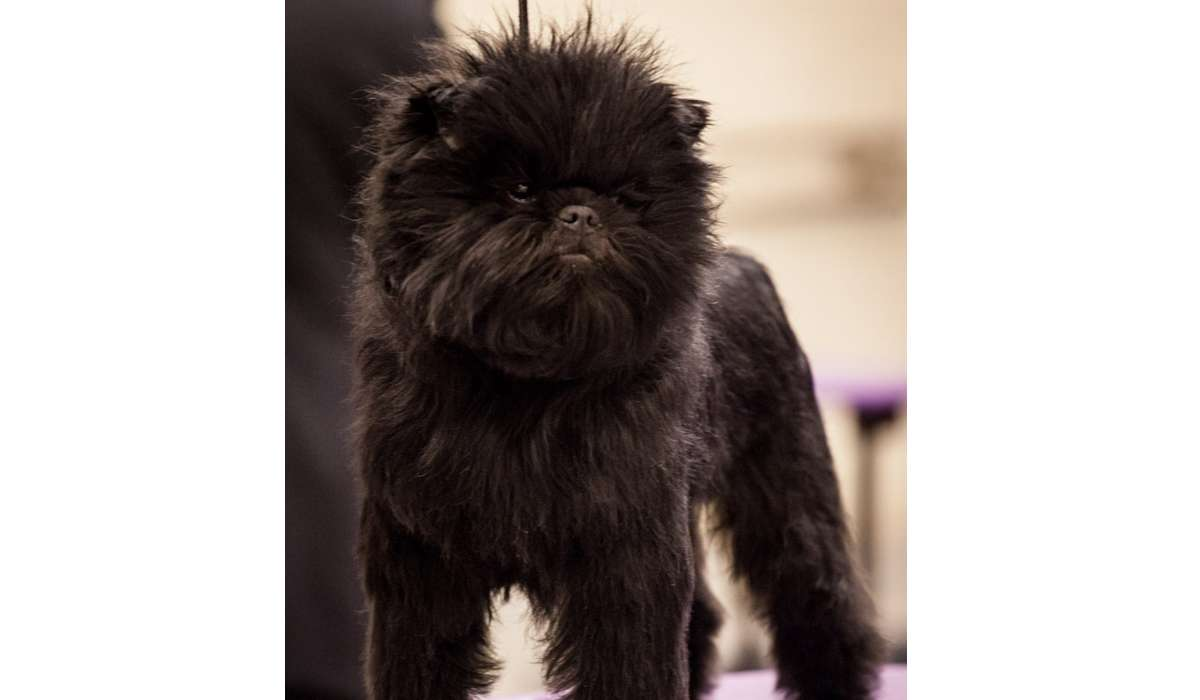 Di che razza è questo cane?