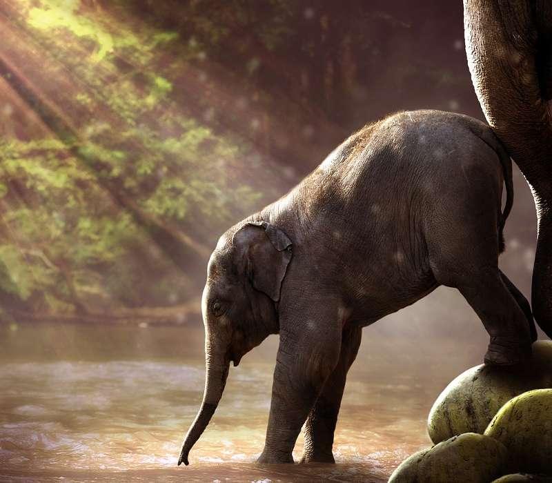 Quanto ne sai sugli animali? Scoprilo con questo quiz sugli elefanti!