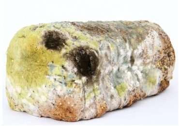 PIccoli funghi che crescono in ambienti umidi. Controlla di saperne abbastanza con questo quiz sulla muffa.