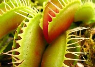 Esistono molte specie di piante, alcune però non si nutrono in kodo usuale. Quanto ne sai sulle piante carnivore?