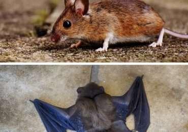 Riesci a rispondere a queste domande del quiz su pipistrelli e roditori? Verifica di essere un esperto di animali.