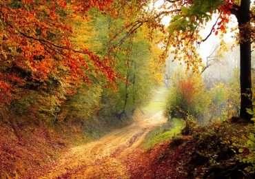 Quiz sulle stagioni, domande su come cambiano, equinozi e ssolstizi, e molto altro.