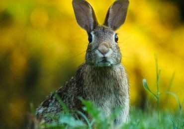 Gli animali emettono molti suoni tra cui il loro verso caratteristico che ci permette di riconoscerli. Tu conosci tutti i versi degli animali?