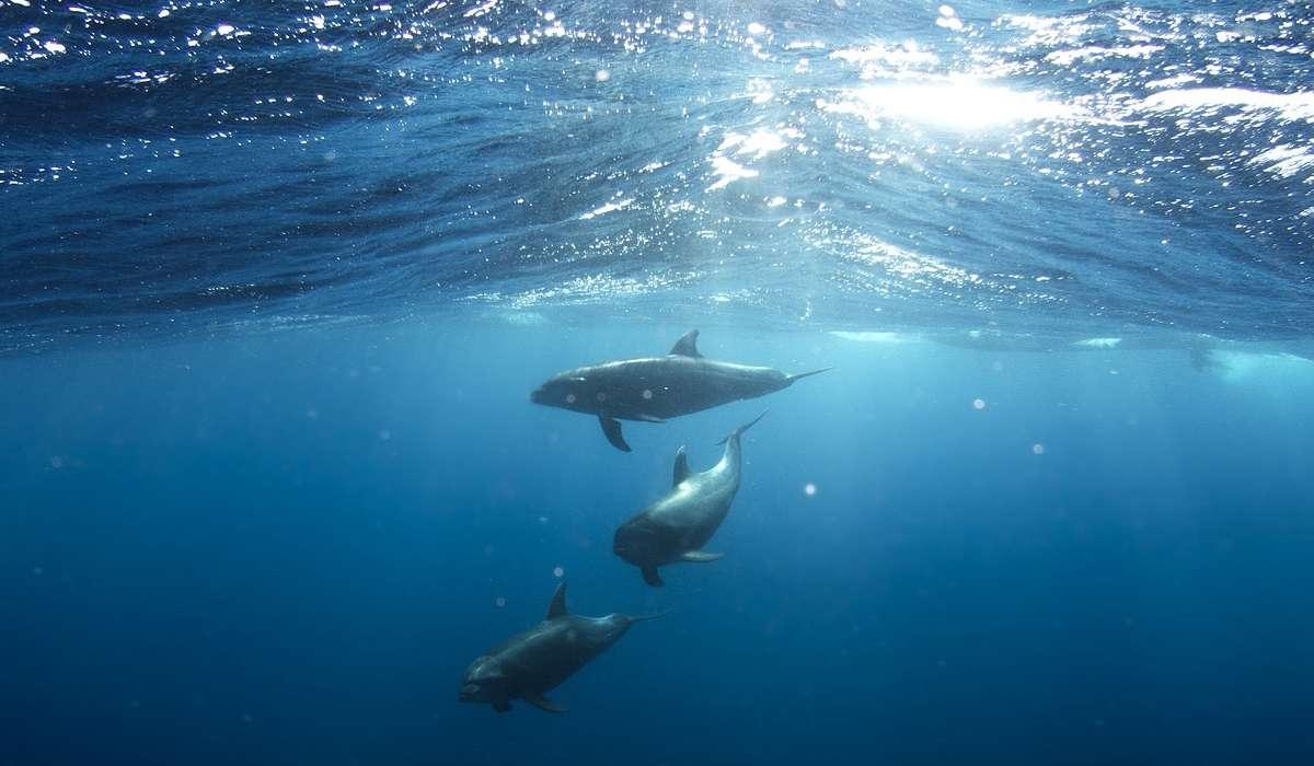 Studio degli organismi animali e vegetali che si sviluppano nell'ambiente marino.