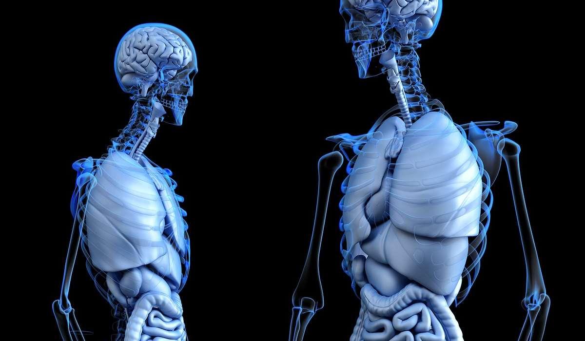 Studio delle parti anatomiche del corpo umano.
