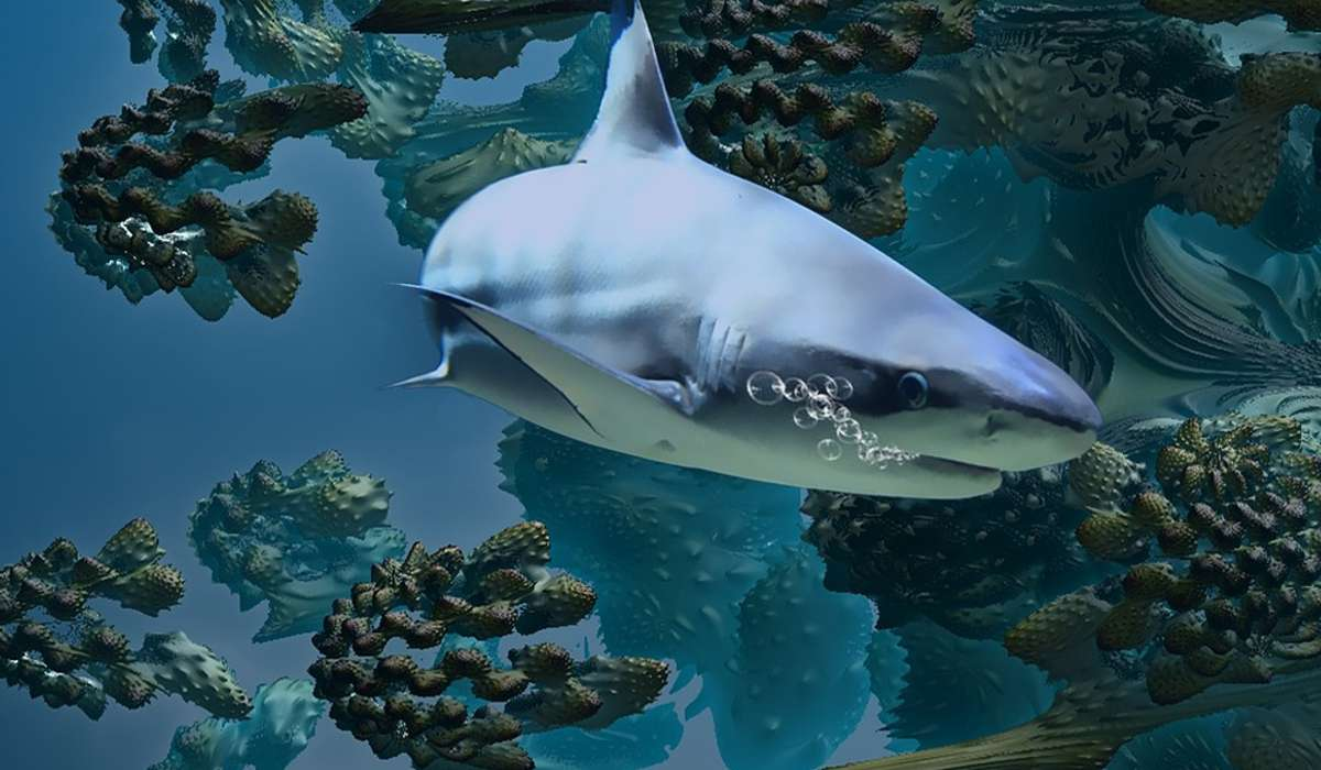Quale età raggiunge la maggior parte degli squali?