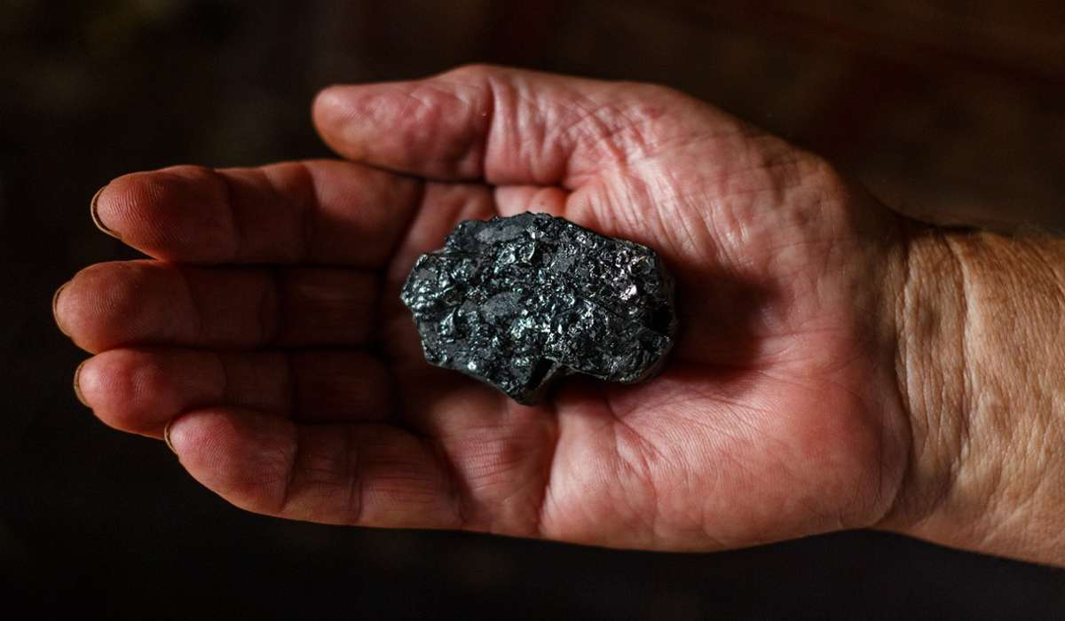Il carbone fossile è formato da quale dei seguenti tipi di materia organica?