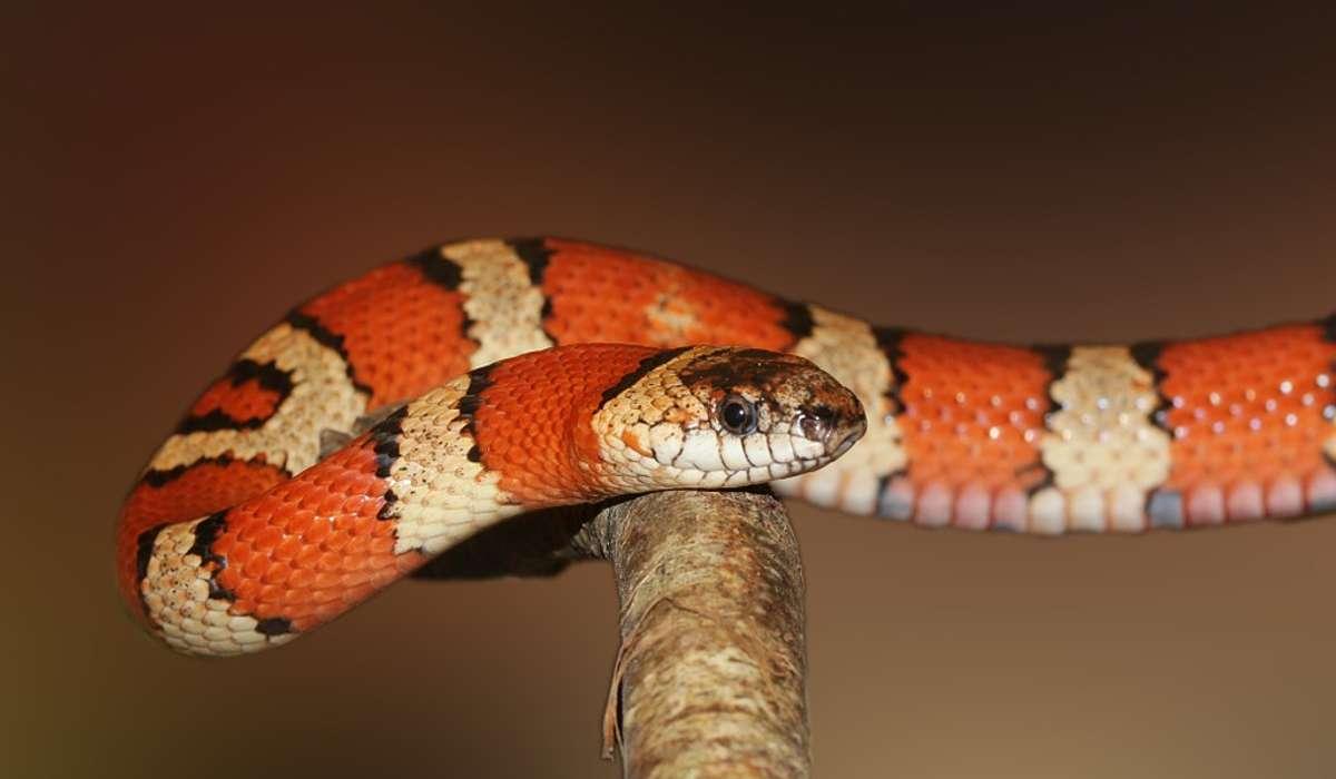 I serpenti sono: