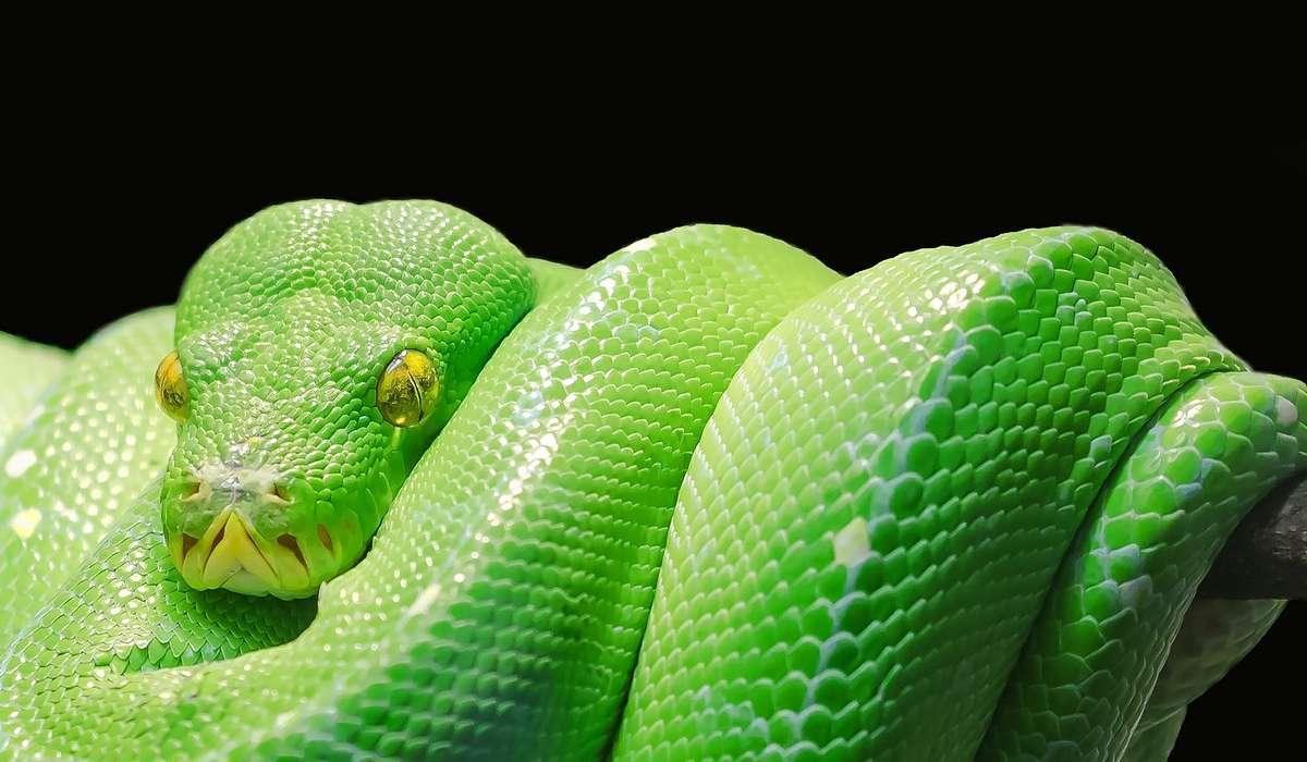 I serpenti sono animali: