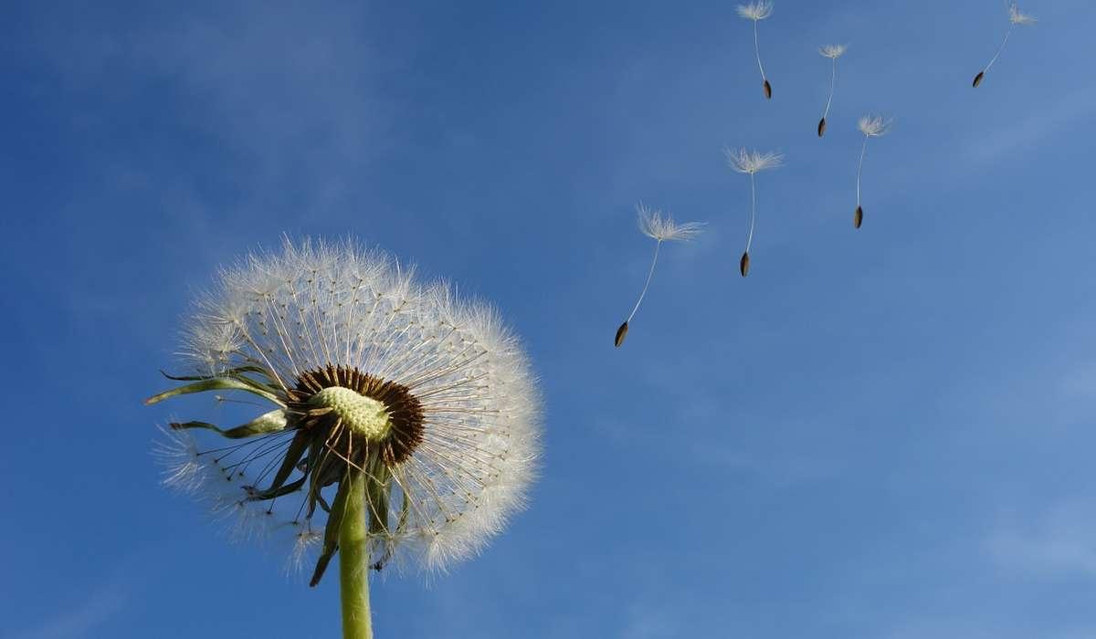 Cos'è un vento in meteorologia?