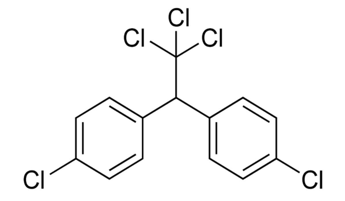 L'aumento della concentrazione di una tossina come il DDT nei tessuti degli organismi è chiamato: