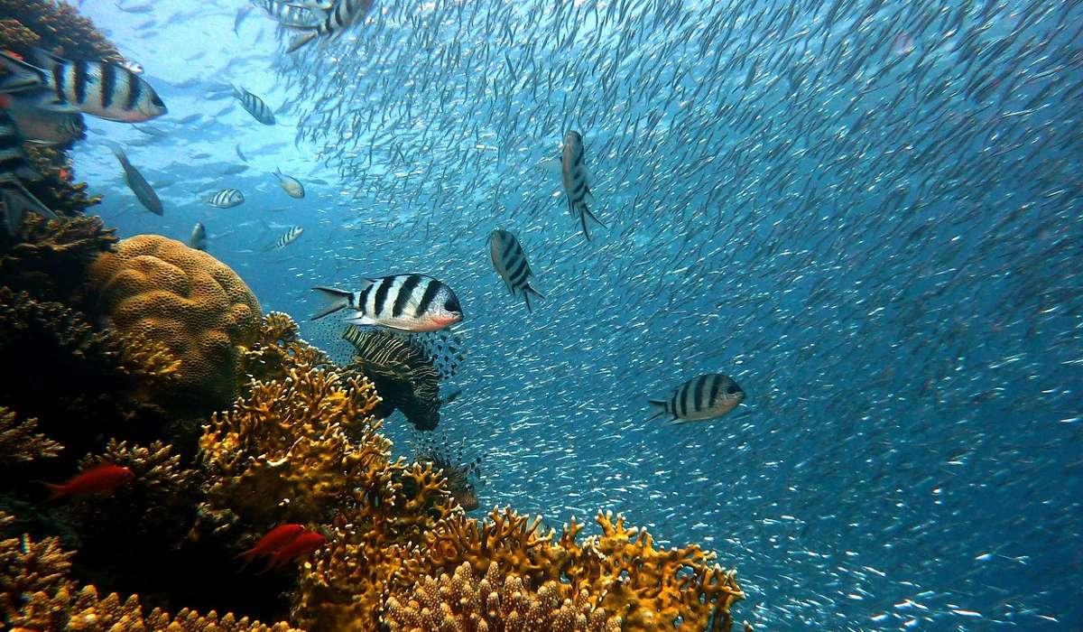 Cosa accade alle barriere coralline con il riscaldamento globale?