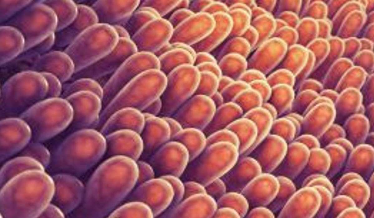 Che nome viene dato alle estroflessioni a forma di dito che rivestono l'intestino tenue?