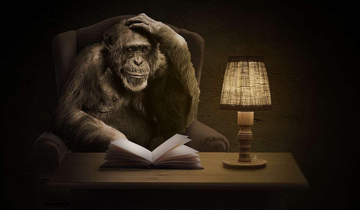 L'intelligenza superiore dello scimpanzé è condivisa con quale altro animale?