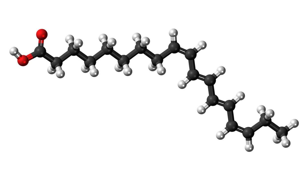 Molecola idrofobica composta da: una lunga catena di atomi di carbonio, idrogeno e con un terminale acido idrofilo.