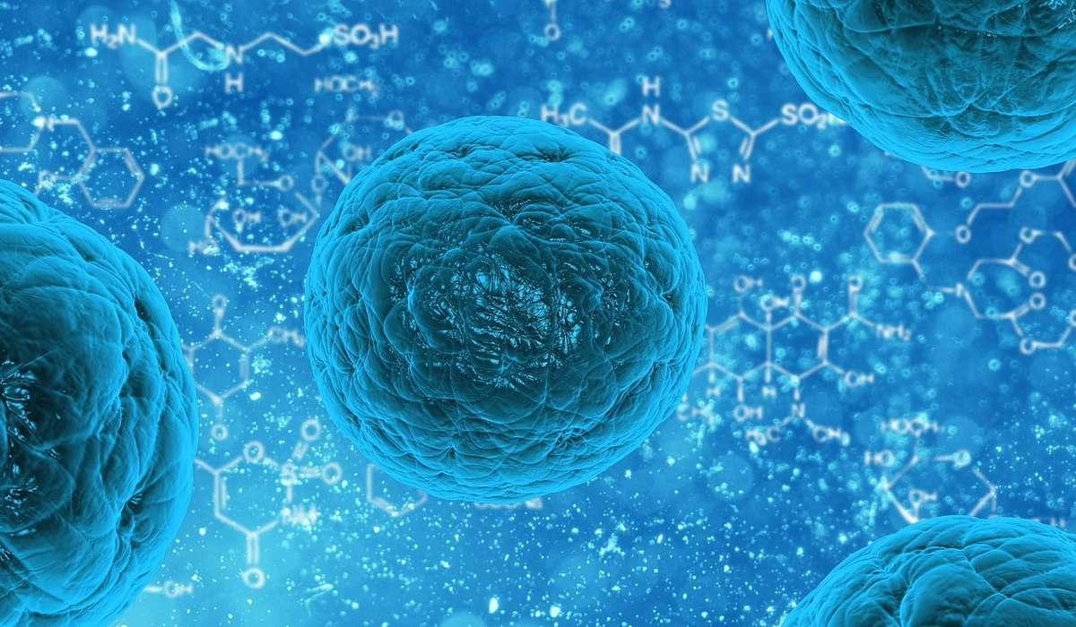Una soluzione acquosa, circondato da un membrana cellulare, con un alto contenuto di proteine presente in tutte le cellule viventi.