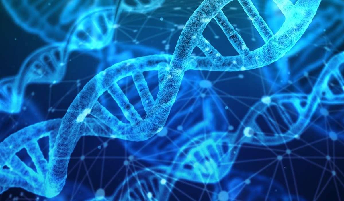 Modificazioni della sequenza nucleotidica del DNA.