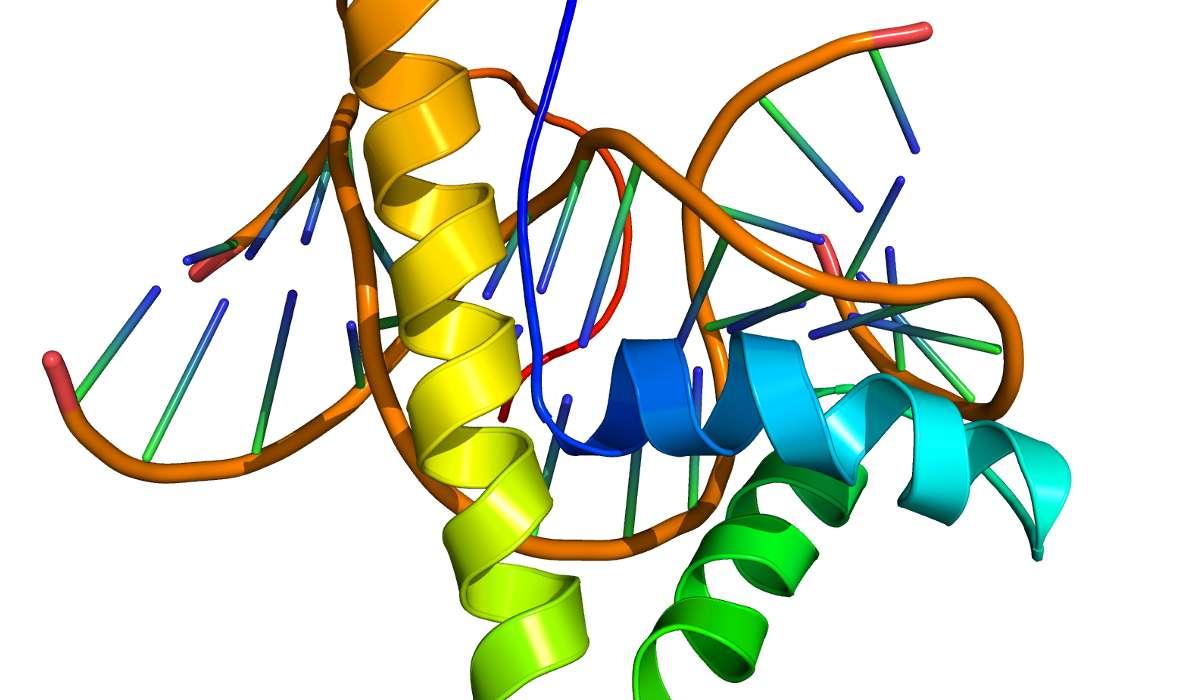 Scienza che studia l'insieme delle proteine, in un dato organismo e in un determinato momento.