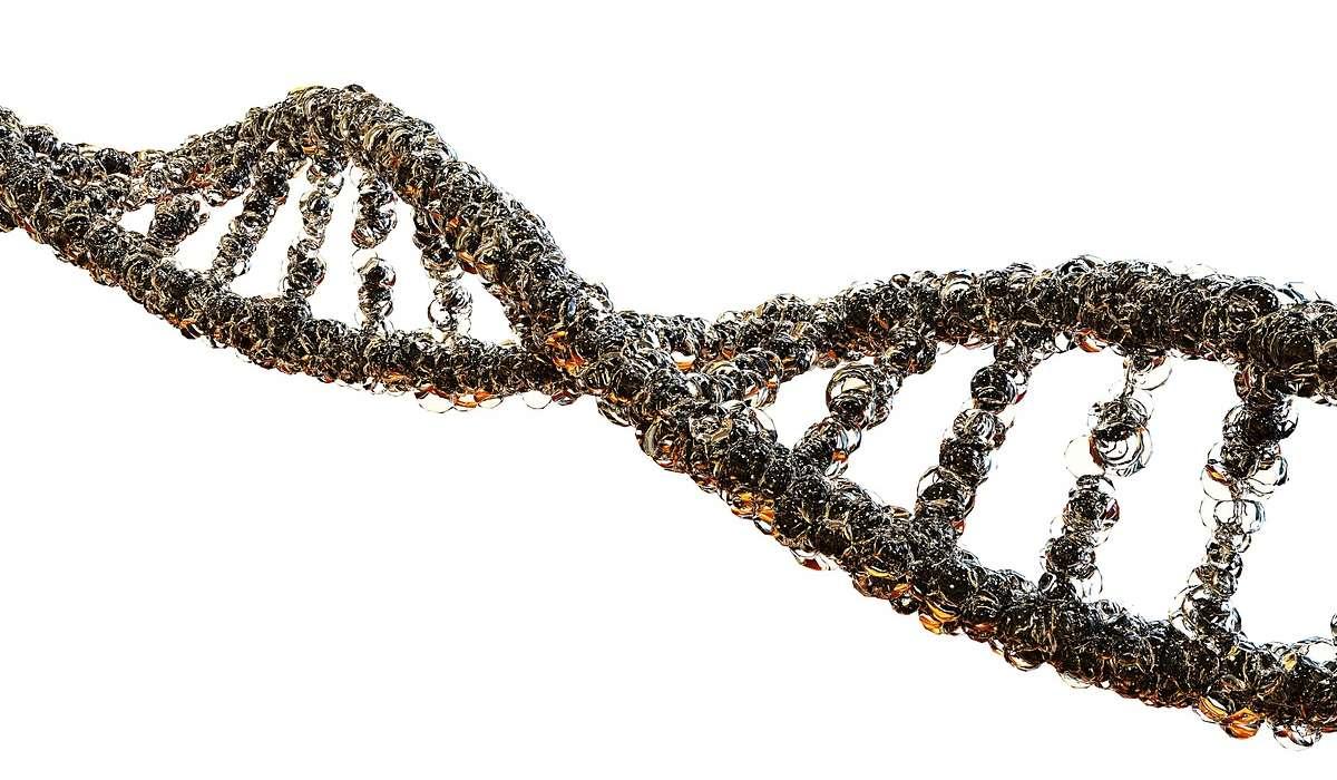 I geni sono trasmessi mediante cosa?