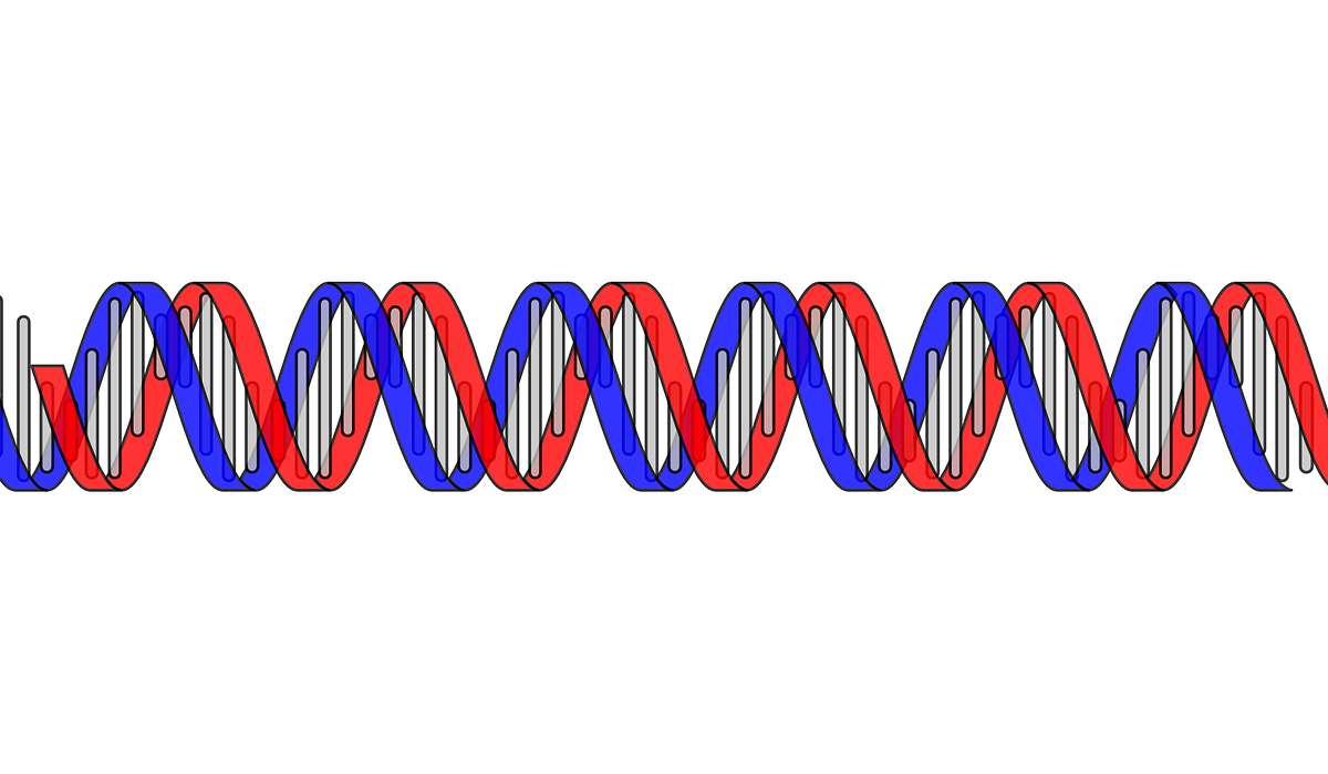 Cos'è un gene?