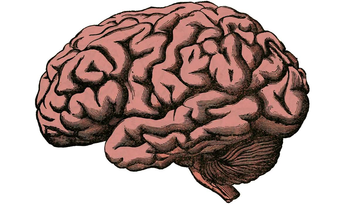 Quale disciplina usa sistemi di ingegneria biomedica per studiare il sistema nervoso?