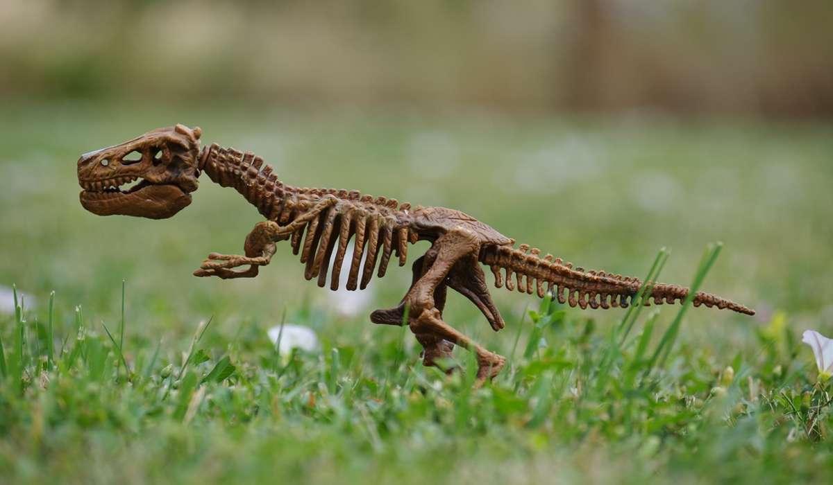 Il colibrì di Elena è l'antenato più piccolo del dinosauro, quali sono le sue dimensioni?