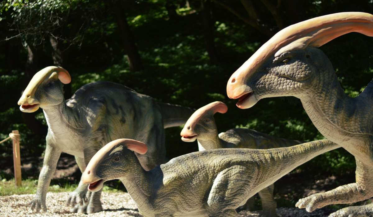 Quale caratteristica speciale condivideva il Parasaurolofo con altri dinosauri con becco d'anatra?