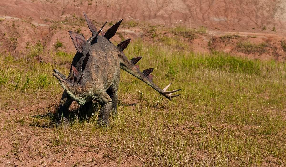 Quale dinosauro è conosciuto per le enormi piastre sul dorso?