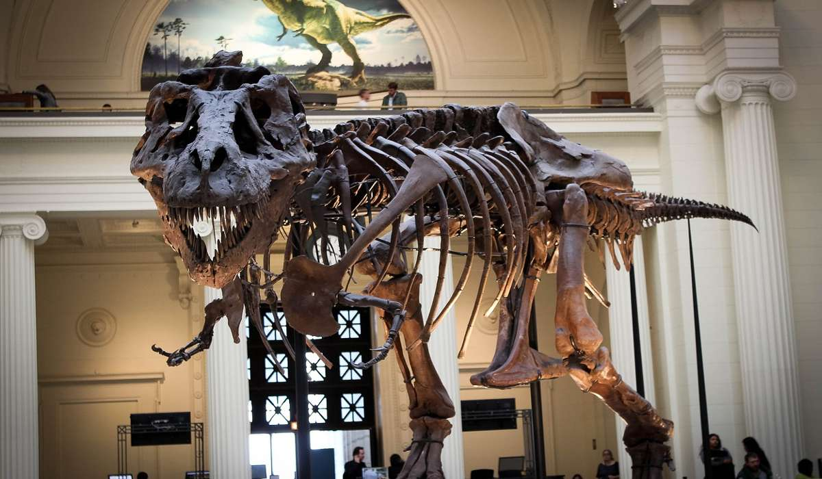 I dinosauri si distinsero, a causa di un'estinzione, da quali loro antenati?