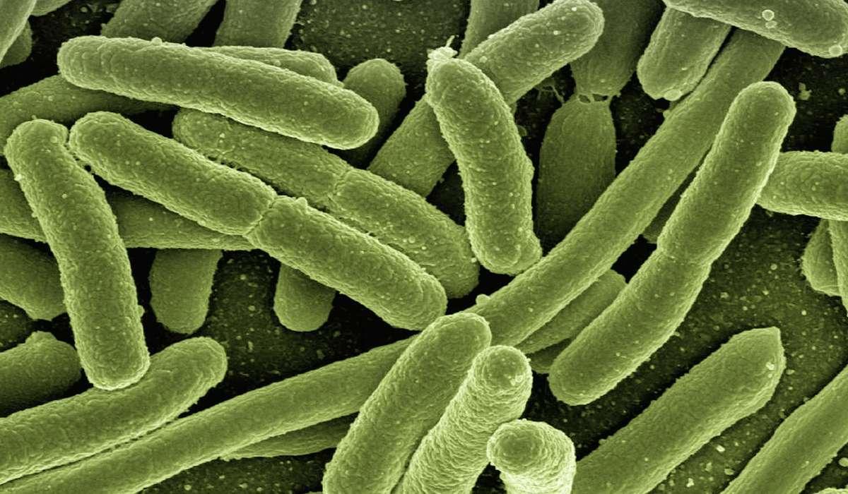 I batteri svolgono un ruolo molto importante negli ecosistemi della Terra perché: