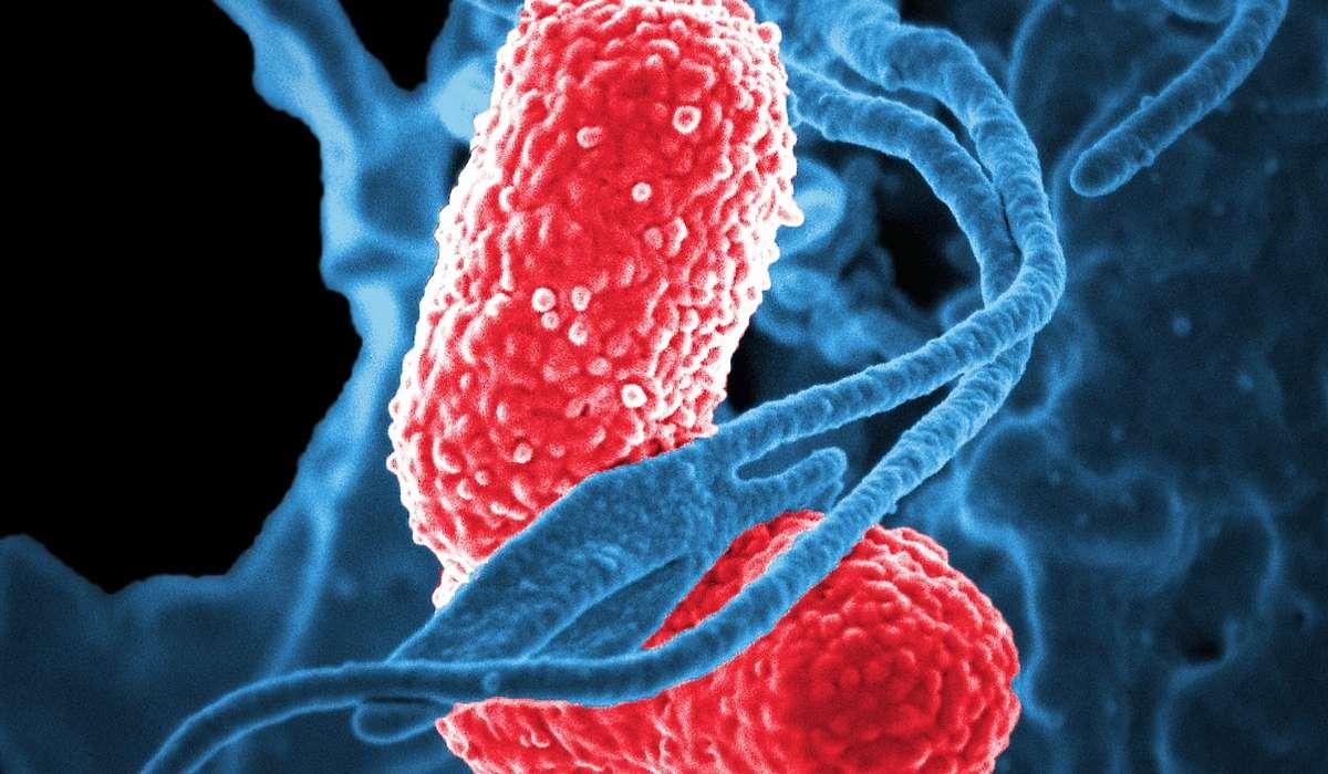 I batteri causano malattie: