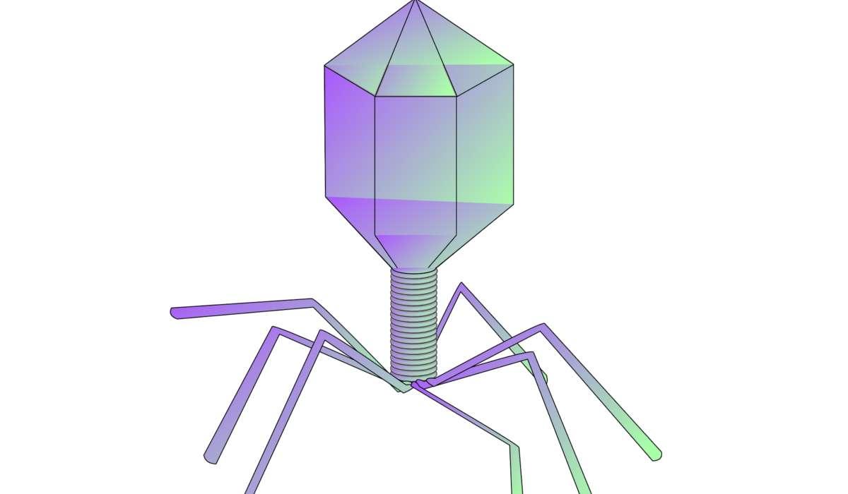 I virus possono rimanere inattivi in una cellula ospite.