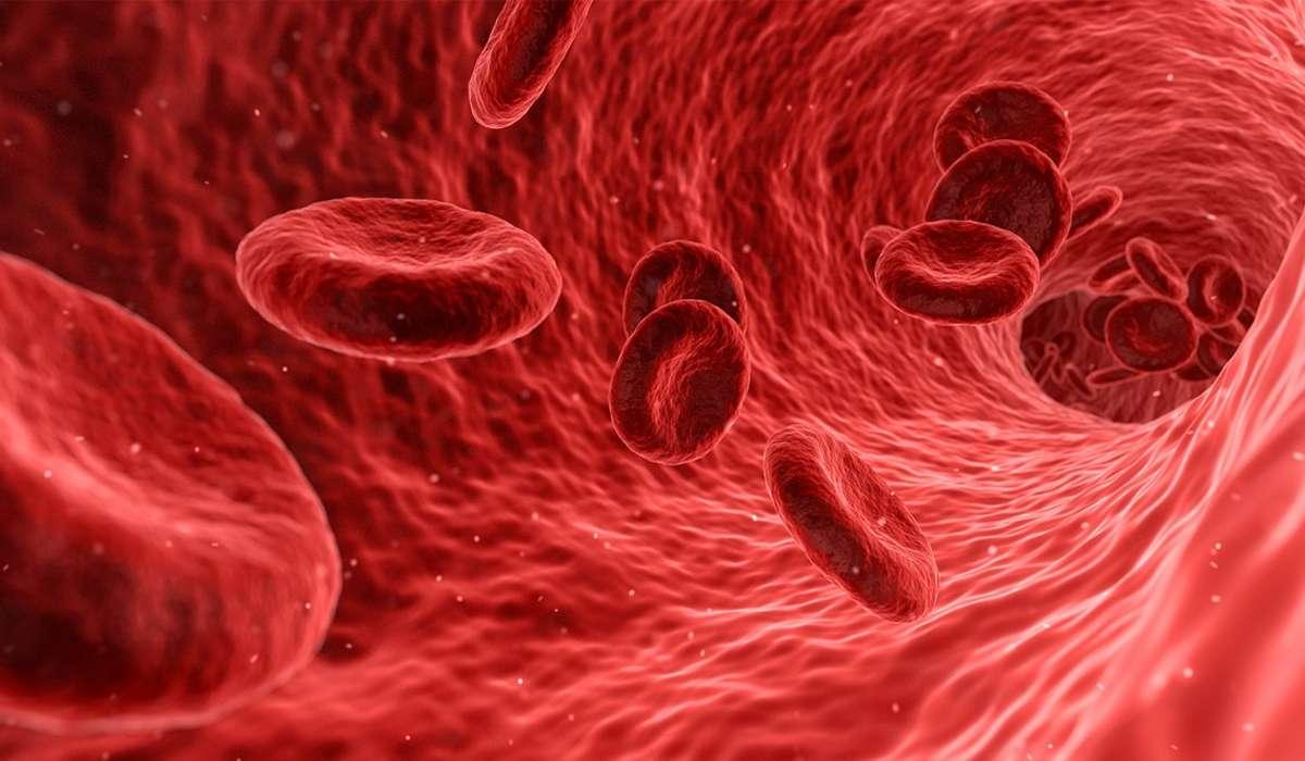 Nel corpo umano i globuli bianchi sono più numerosi dei globuli rossi.