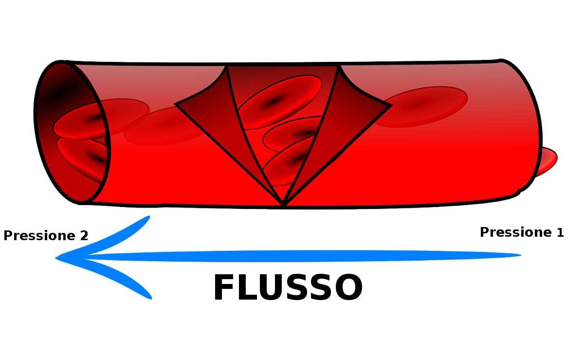 Nel corpo umano, il sangue scorre anche grazie a delle differenze di pressione.