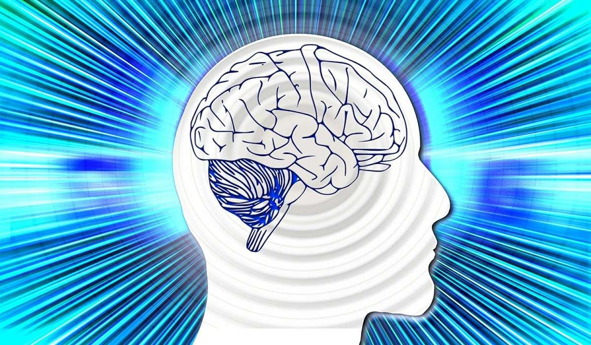 Quale di queste ha la funzione di proteggere il tessuto cerebrale?