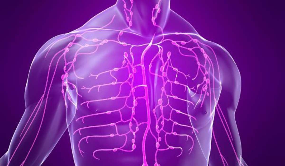 Quale dei seguenti non è un componente del sistema linfatico?