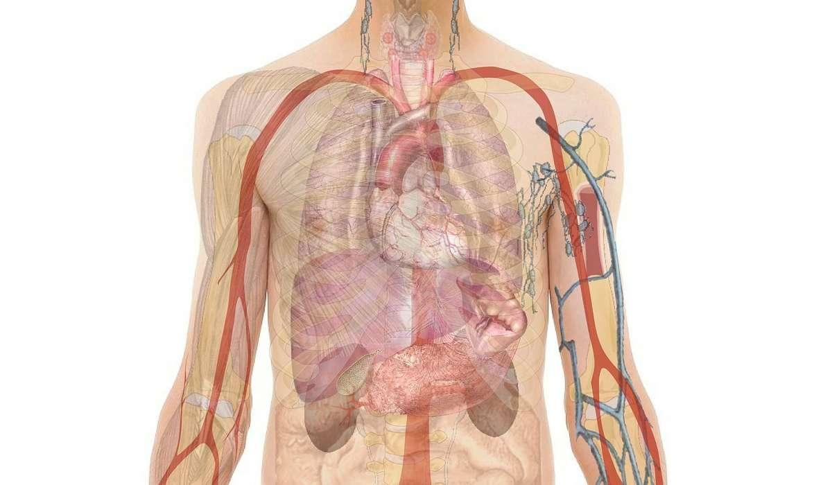 Quanti anni fa si pensa sia stato descritto per la prima il sistema immunitario?