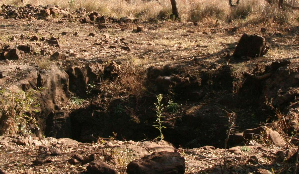 Un membro di questo genere è stato scoperto nel 2008 nel sistema delle grotte di Malapa in Sud Africa da Matthew Berger, quale?