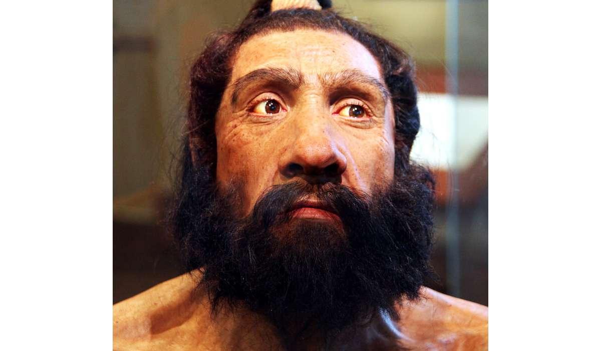 I Neanderthal appartengono a quale gruppo?