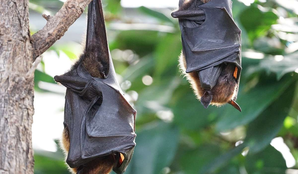 I pipistrelli appartengono a quale famiglia?