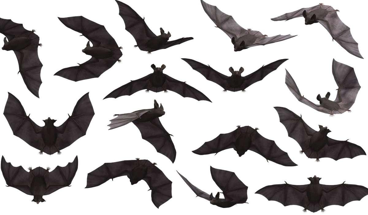 Come è chiamato un insieme di pipistrelli?