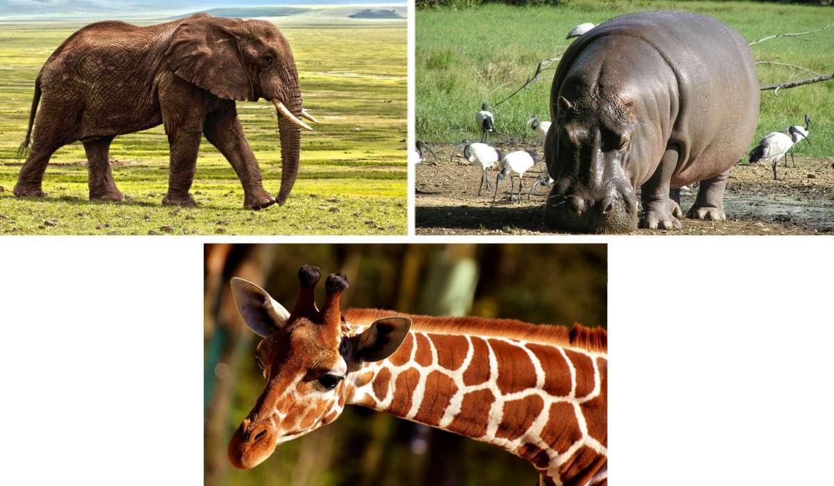 Qual è il più grande mammifero che vive sulla terra?