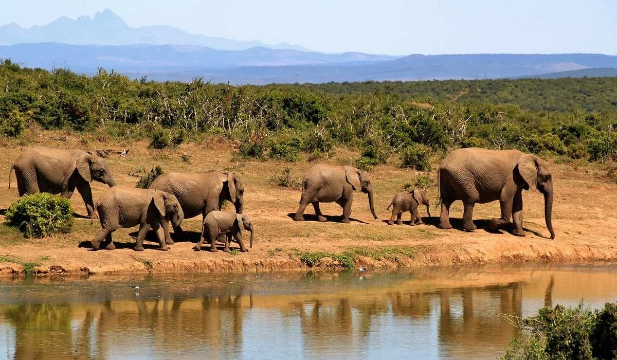 Qual è l'habitat naturale degli elefanti?