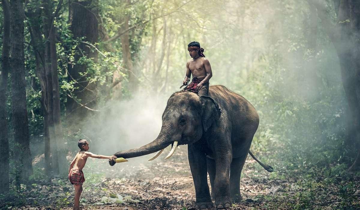Per cosa vengono addestrati principalmente gli elefanti?