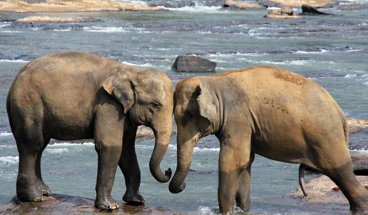 Cosa fa l'elefante per rinfrescarsi?