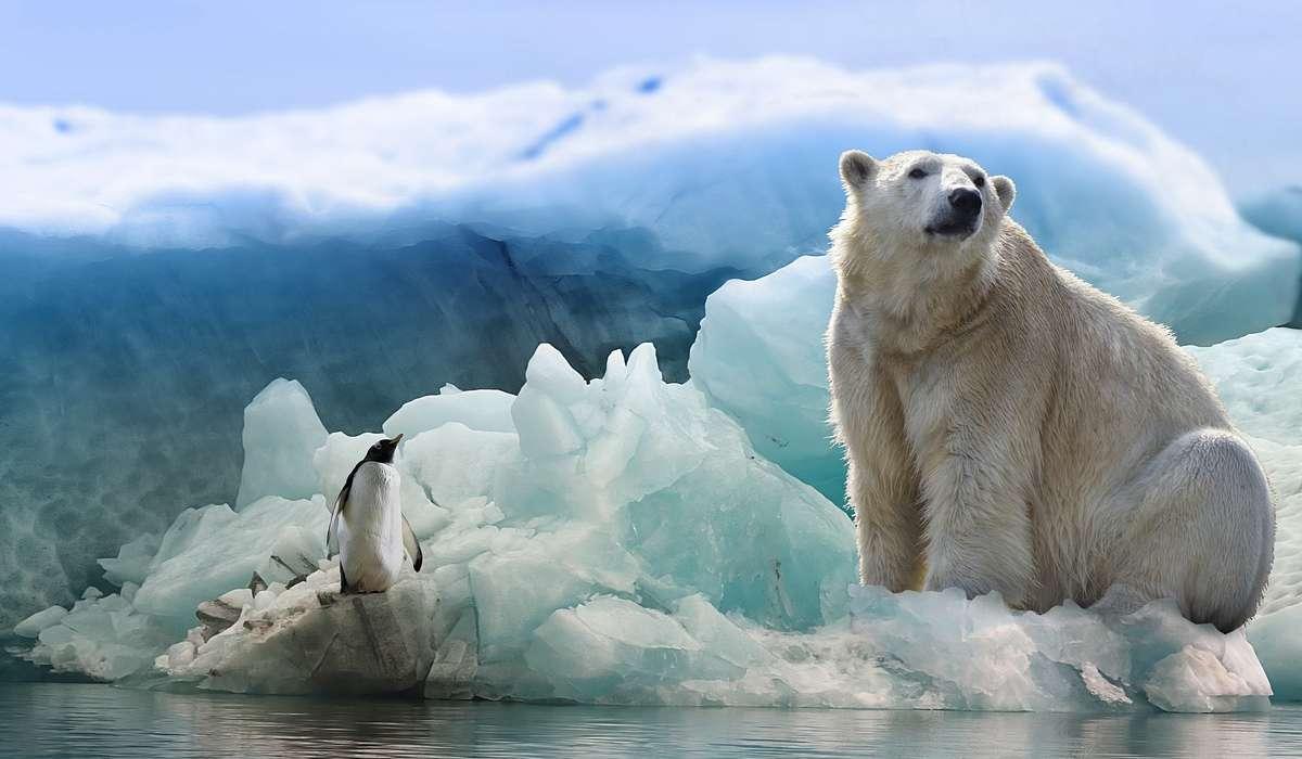 Qual è la stima degli esemplari di orsi polari ancora in vita?