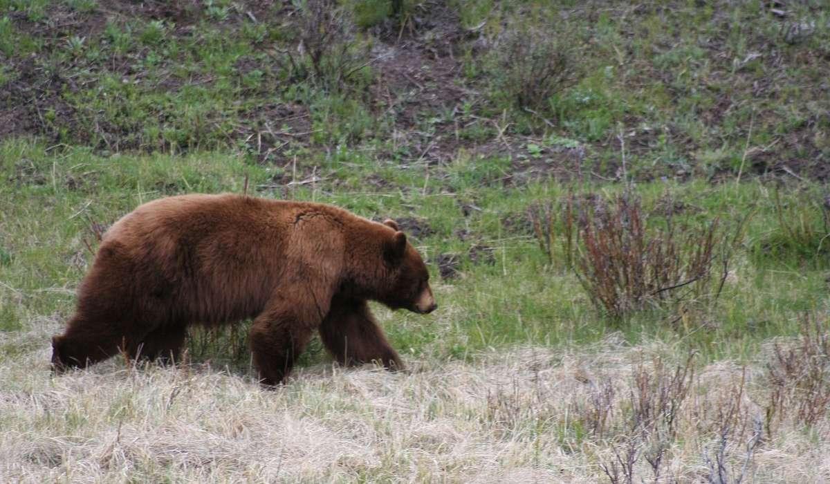 L'orso è il simbolo di quale città?