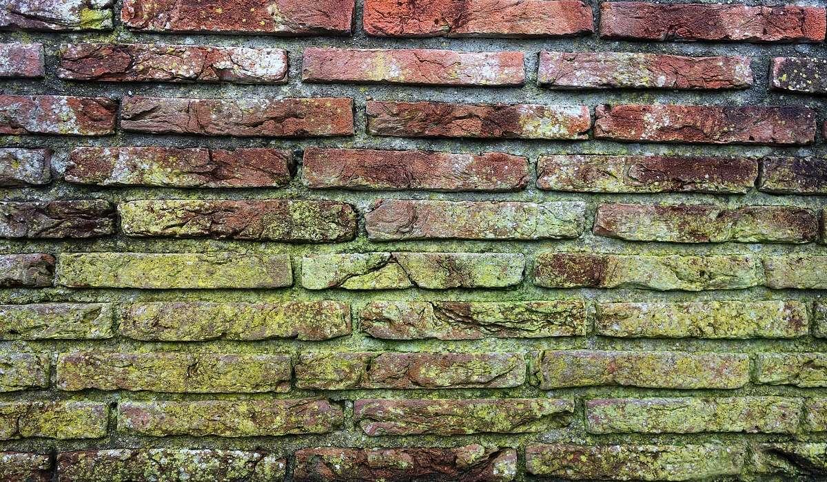 L'insediamento delle muffe nelle pareti spesso non è limitato al solo strato superficiale.