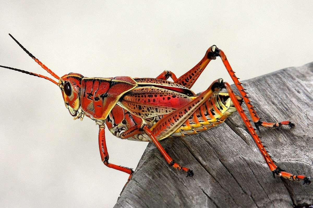 Quale di questi è un segnale di avvertimento che non dovresti mangiare un insetto?